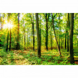 Fototapete Wald Vliestapete Kinderzimmer Tapete inkl. Kleister
