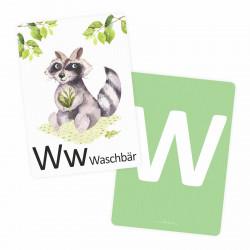 Buchstabenkarte - W wie Waschbär