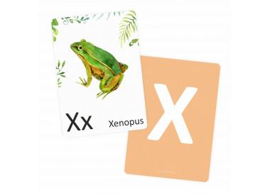 Buchstabenkarte - X wie Xenopus
