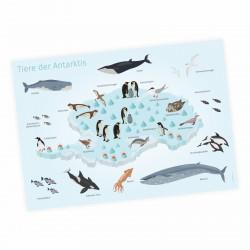 Kinder Lernposter - Tiere der Antarktis - Wal Delfin Pinguin Robbe