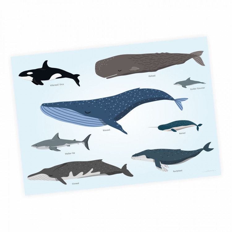 Kinder Lernposter - Tiere der Meere - Wal Delfin Orca Hai - Wanddeko Kinderzimmer